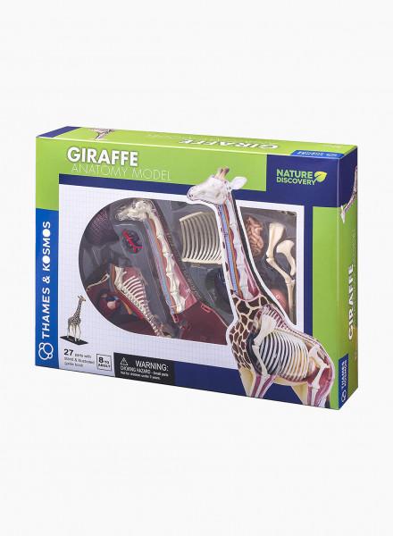 "Educational Game ""Animal Anatomy: Giraffe"""