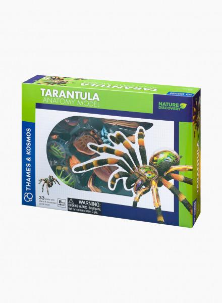 "Educational Game ""Animal Anatomy: Tarantula"""